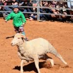 Sheep Tagging