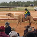 Action at the Boulia Camel Races