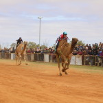 Boulia Camel Races in Action. Image Jan Norton