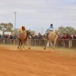 Boulia Camel Races. 2
