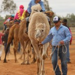 Boulia Camel Races. Getting Ready to Race