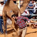 Camel Tagging